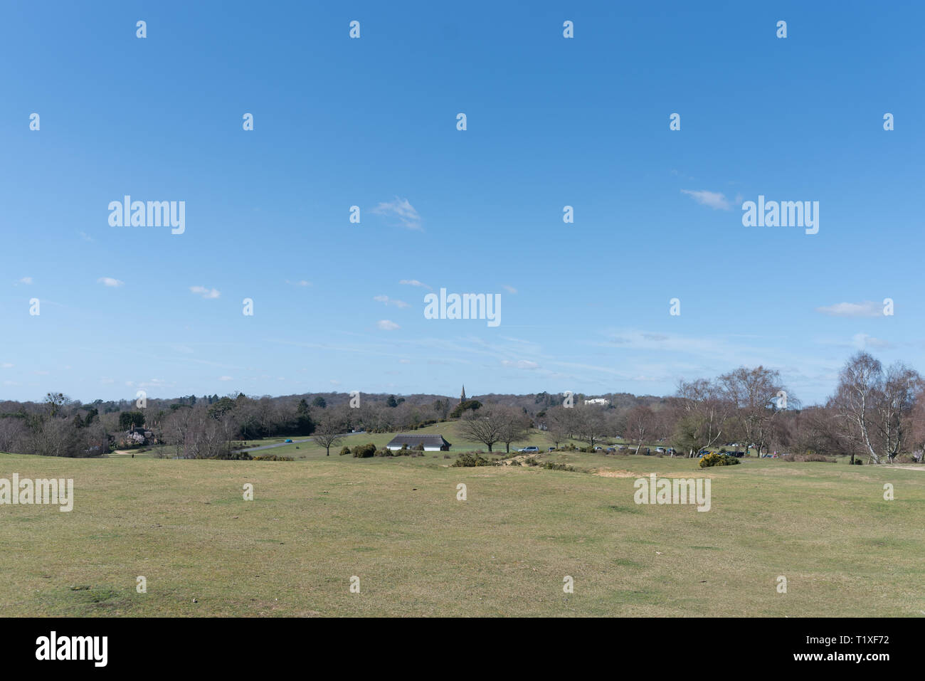 new Forest Lyndhurst on sunny day showing dales and forest scene - Stock Image