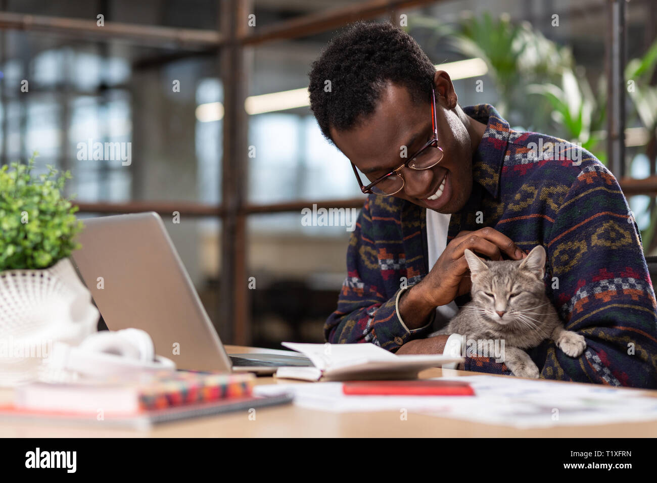 Cute grey cat distracting employees from work Stock Photo