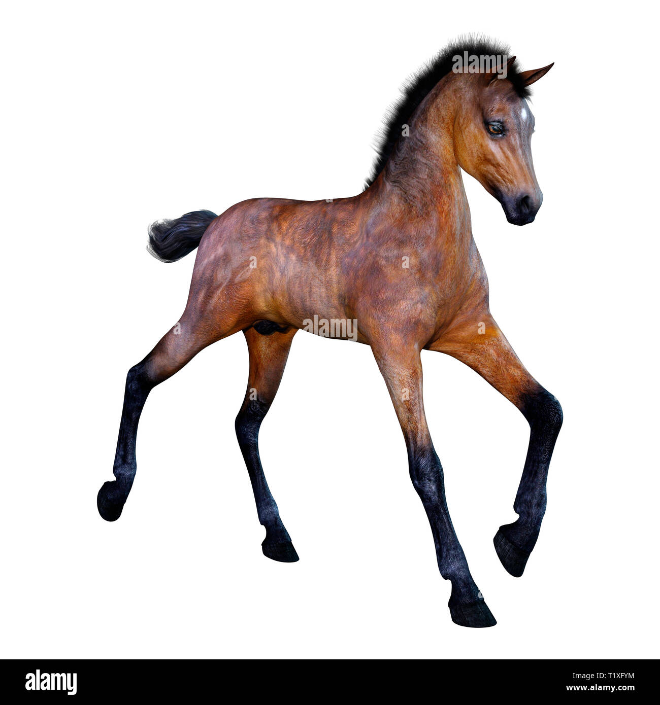 3D rendering of a bay horse foal isolated on white background - Stock Image