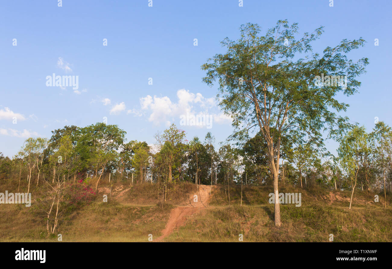Tree on Small Hill with Blue Sky and Road Right Frame. Tree landscape with blue sky and road in good weather in winter - Stock Image
