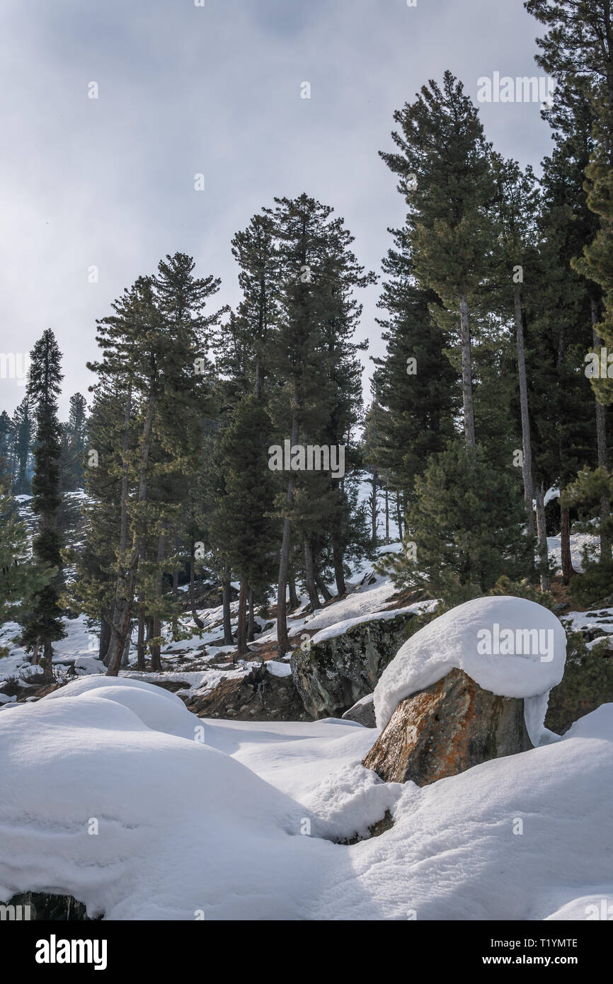 Boulders and rocks covered with snow with alpine trees conifers in the background - Stock Image