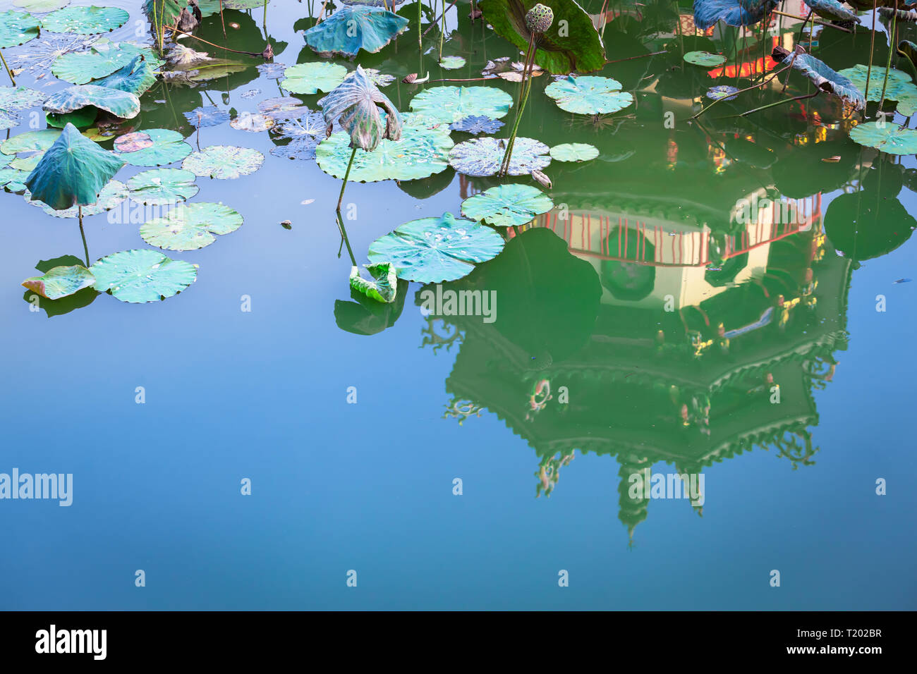 Tranquil scene of water lily lotus leaves at pond, reflection of traditional asian architecture detail and blue sky (copy space) - Stock Image