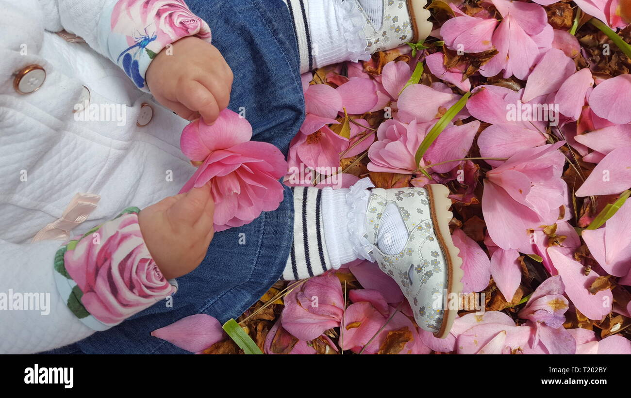 bbab525879897 Top view baby girl seating on ground covered in pink petals, in stripy  tights,