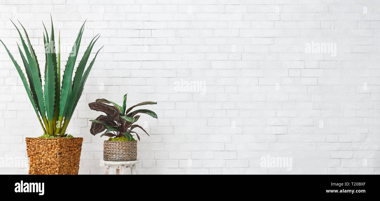 Home greenery concept - Stock Image