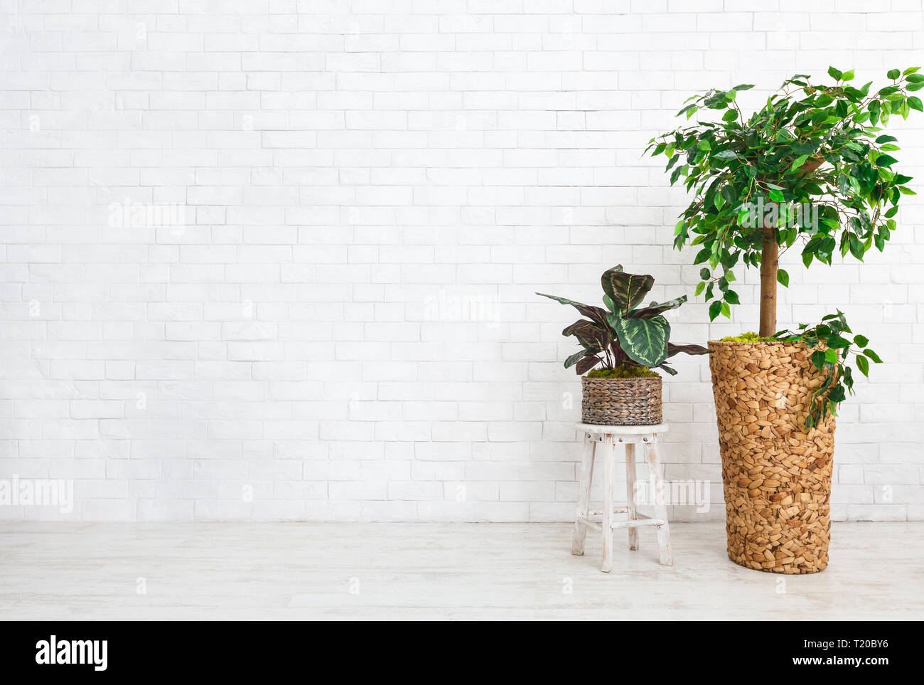 Home plants composition standing on floor at white brick wall background, copy space - Stock Image