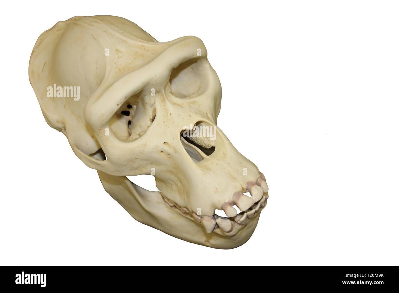 Cutout Skulls Stock Photos & Cutout Skulls Stock Images - Alamy