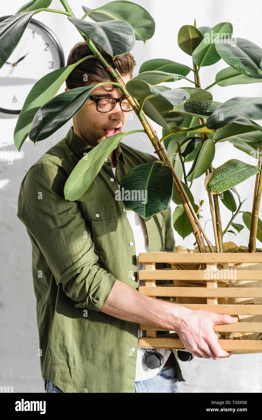 cunning man in green shirt and glasses holding pot with plant near brick wall in office - Stock Image