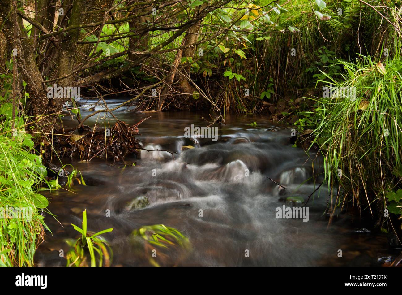 water stream in the Sauerland (Ebbegebirge) - Stock Image