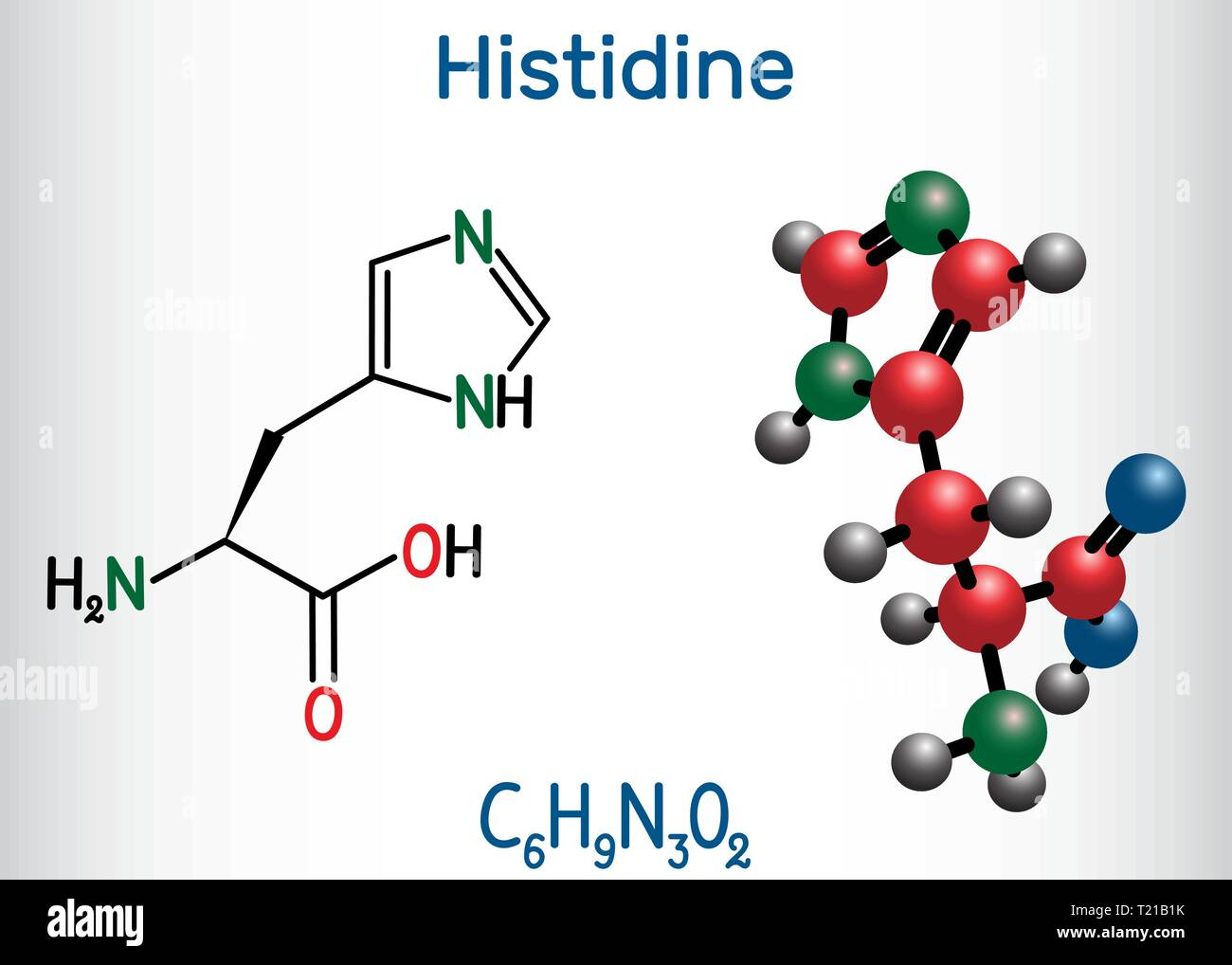 Histidine (L- histidine , His, H) amino acid molecule. It is used in the biosynthesis of proteins. Structural chemical formula and molecule model. Vec - Stock Image