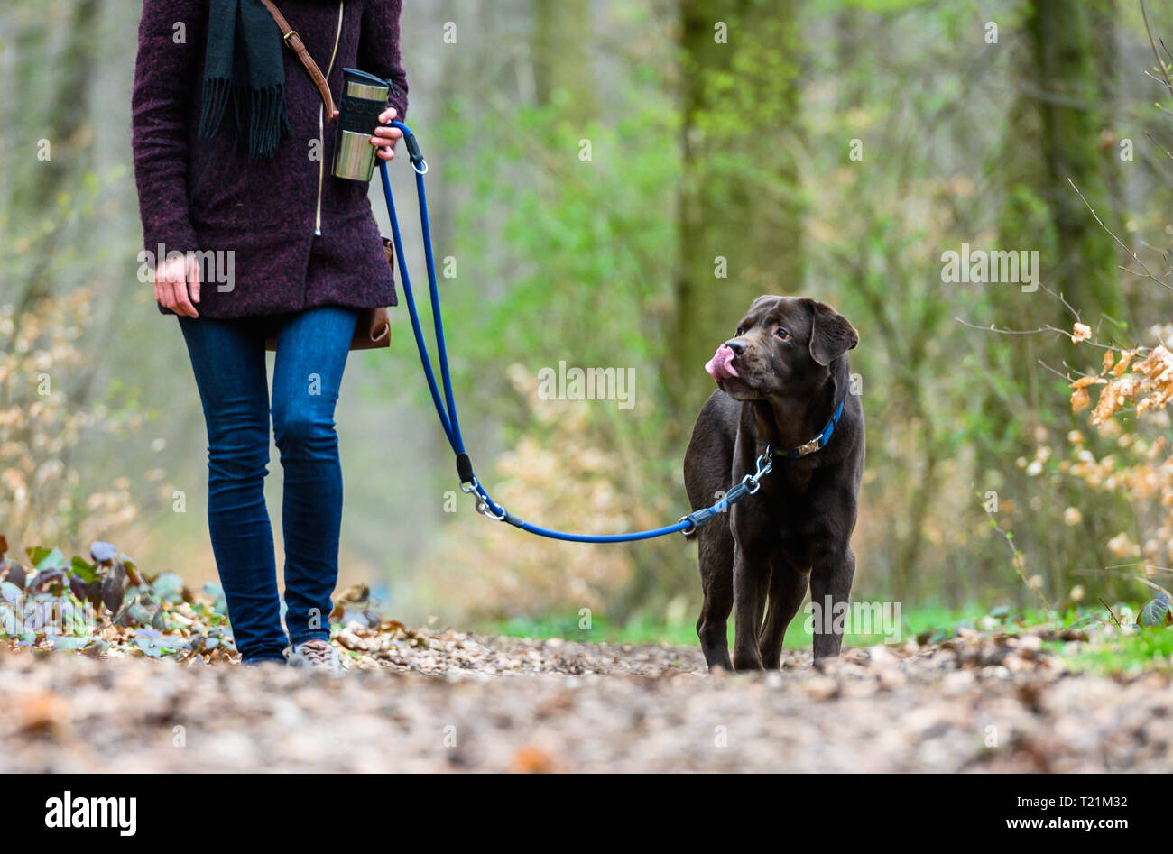Hannover, Germany. 26th Mar, 2019. A woman goes for a walk with her dog Cajus, a nine-year-old Labrador retriever. From 01.04.2019 dogs have to be kept on a leash in many places in Lower Saxony. During the so-called brood and Setzzeit, the quadrupeds may not run freely approximately in the forest and on field-paths. Credit: Christophe Gateau/dpa/Alamy Live News - Stock Image