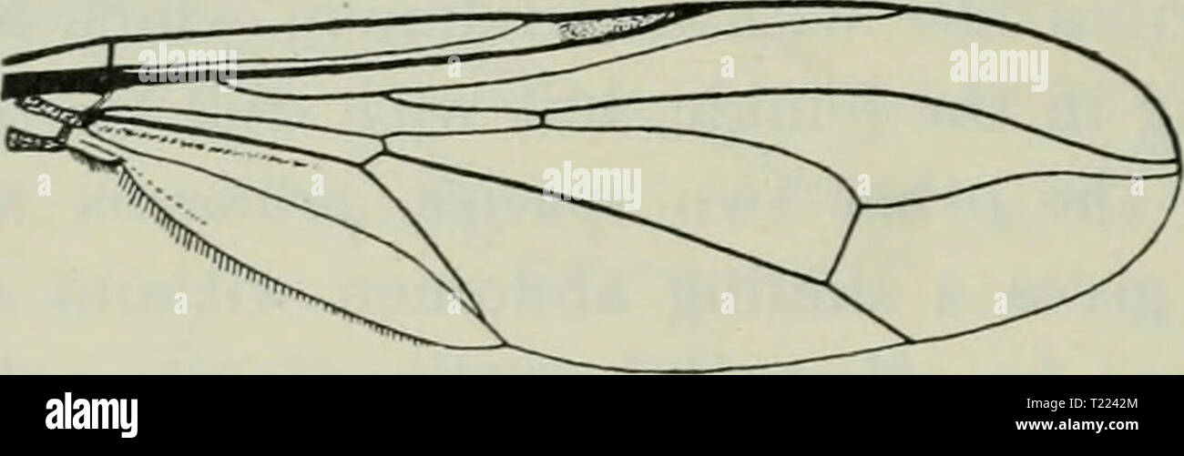 Archive image from page 49 of Diptera Danica genera and