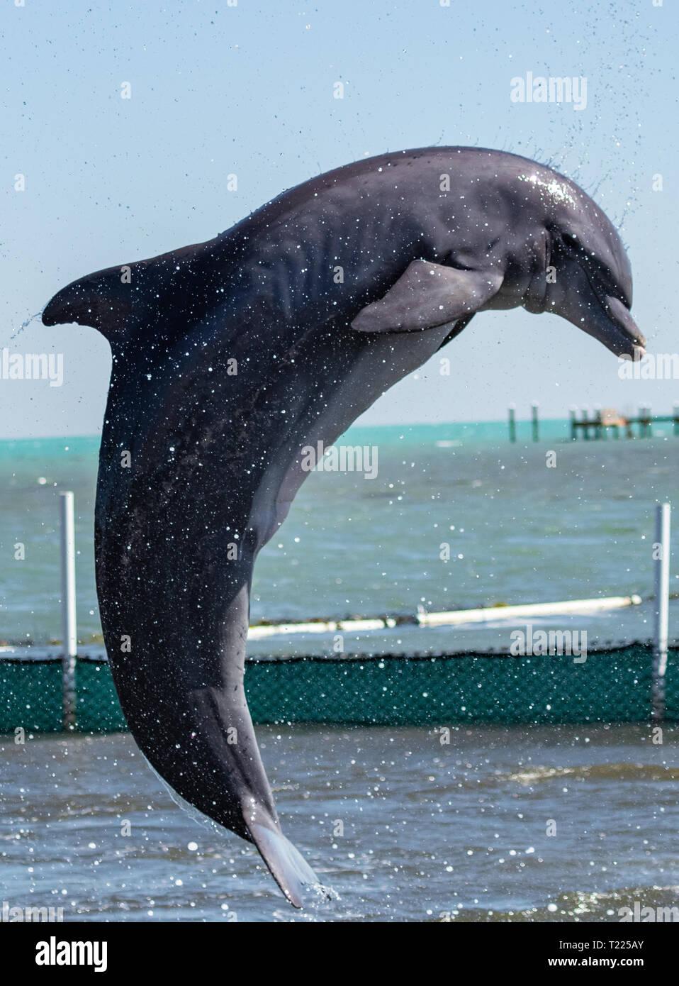 Dolphin Research Center Marathon, FL USA March 22 2019 - Stock Image