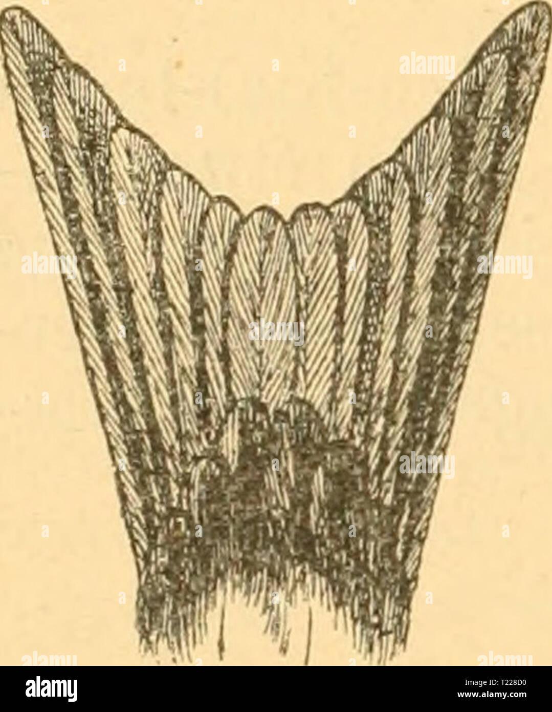 Archive image from page 897 of Die Vögel der paläarktischen Fauna Stock Photo