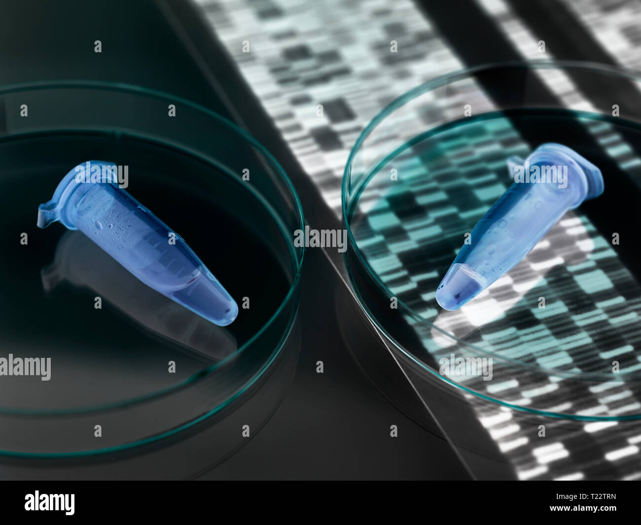 Eppendorf vials containing a human sample with the DNA autoradiogram results - Stock Image