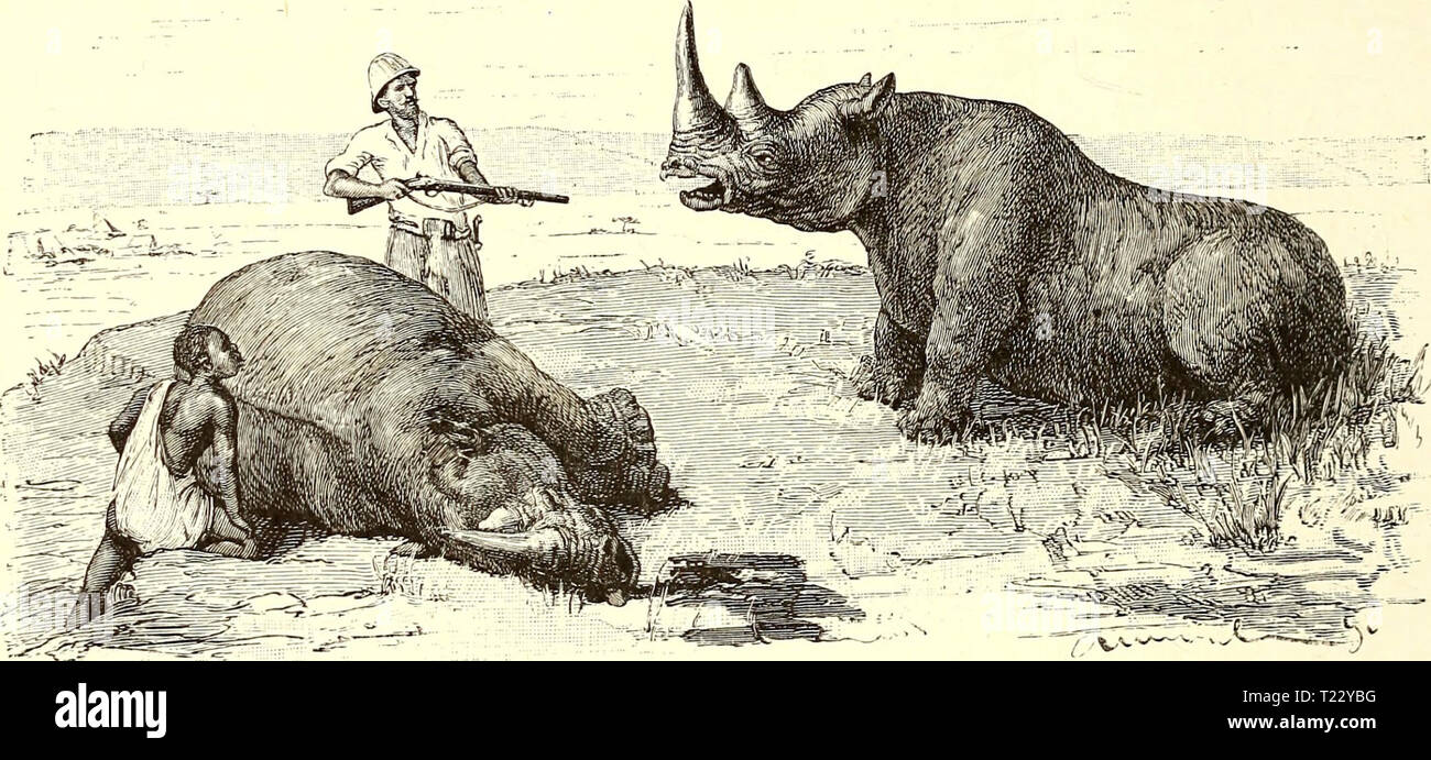 Archive image from page 35 of Discovery of lakes Rudolf and Discovery of lakes Rudolf and Stefanie; a narrative of Count Samuel Teleki's exploring & hunting expedition in eastern equatorial Africa in 1887 & 1888  discoveryoflakes02hhne Year: 1894  20 AT NYEMPS fell where they stood ; the female, whom I had partly paralysed by a shot in the spine, would not give in for a long time, but lay down like a dog, and, whirling round and round with cries such as we had never heard before, rather like those of a pig being killed, she made it impossible to get an aim at any part but her forehead, which w - Stock Image