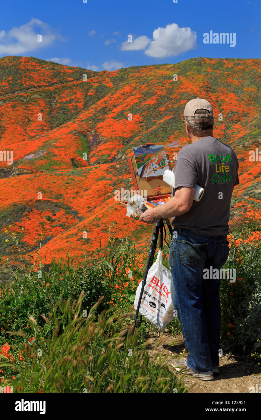 Painter, Walker Canyon Conservation Area, Lake Elsinore, Riverside County, California, USA - Stock Image