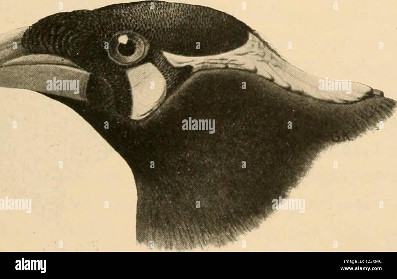 270 280 stock photos \u0026 270 280 stock images alamyarchive image from page 364 of die vögel; handbuch der systematischen die vögel; handbuch