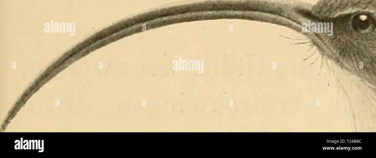 Creativery Spitzenband 13mm x 10m Wei/ß