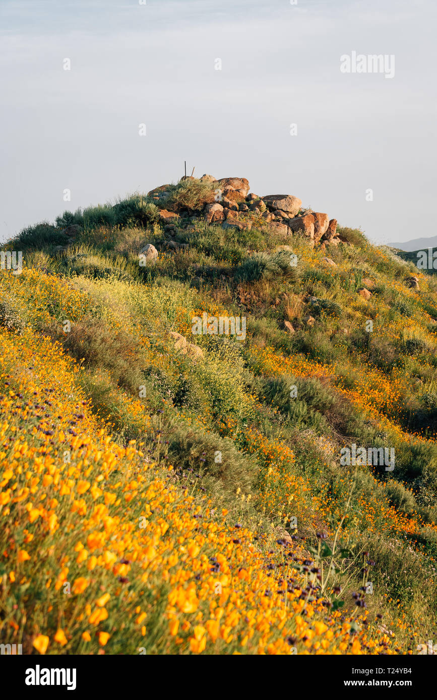 Poppies and rocky hill at Walker Canyon, in Lake Elsinore, California - Stock Image
