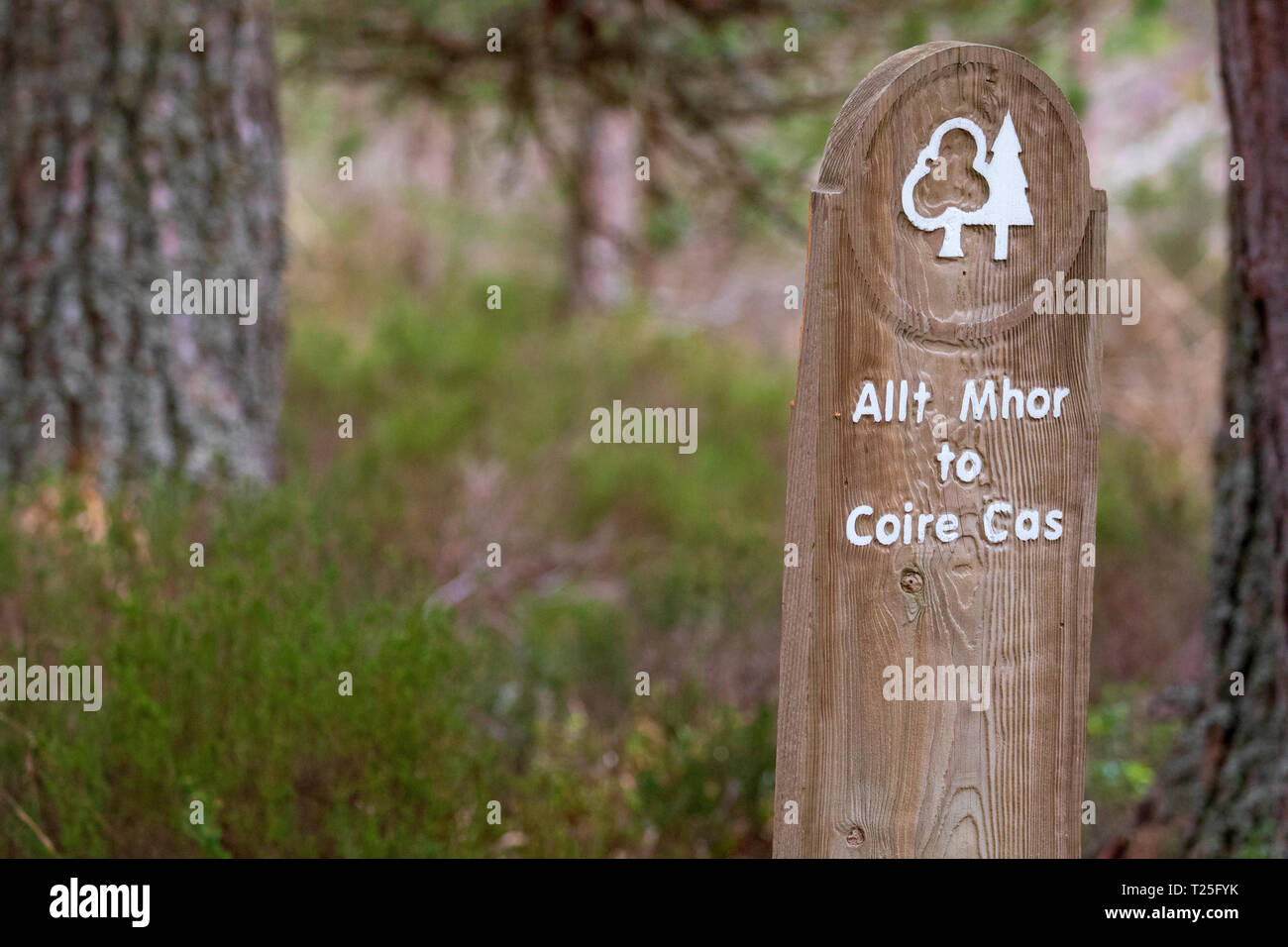 Allt Mhor to Coire Cas wood carved walking post showing direction and start of walk at Glenmore Forest Park in the Cairngorms National Park, Aviemore - Stock Image