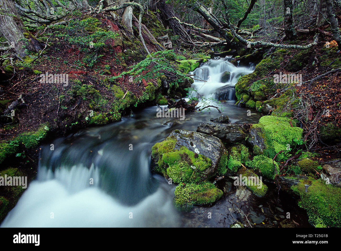 Stream at Tierra del Fuego National Park, Tierra del Fuego, Argentina Stock Photo