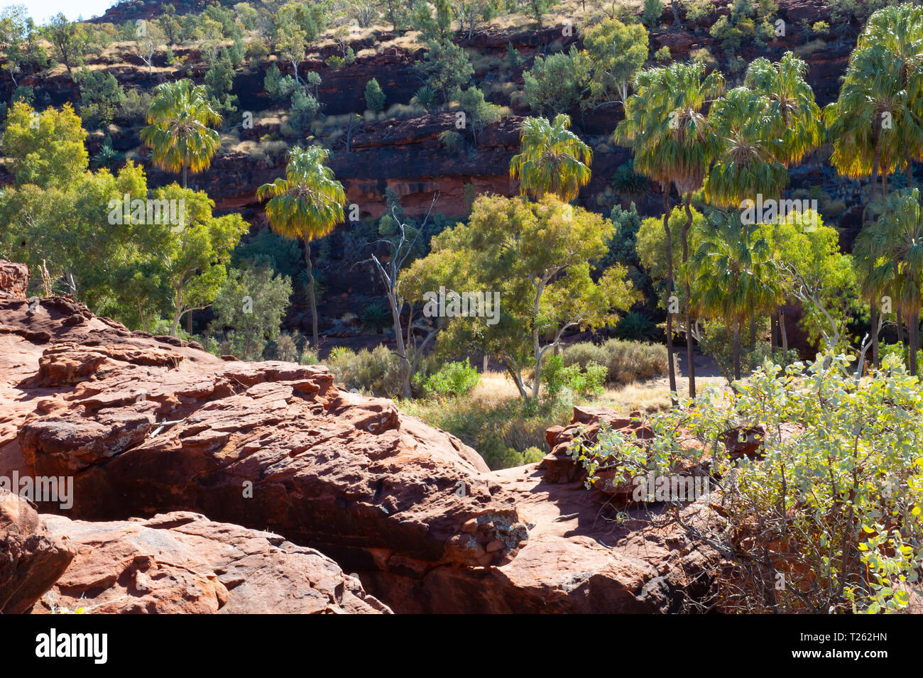 Dramatic landscape of Palm Valley, Northern Territory, Australia Stock Photo
