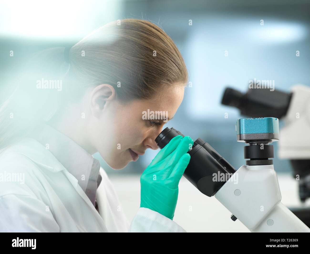 Scientist viewing a sample under a microscope in the laboratory - Stock Image