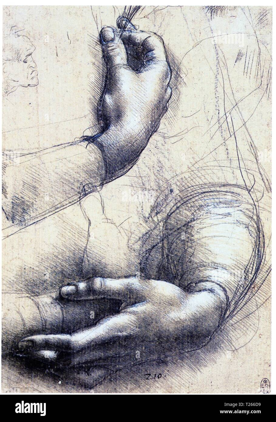 LEONARDO DA VINCI.STUDY OF ARMS AND HANDS.1474.SILVERPOINT HEIGHTENED WITH WHITE ON PINK PREPARED PAPER.214X150 MM - Stock Image