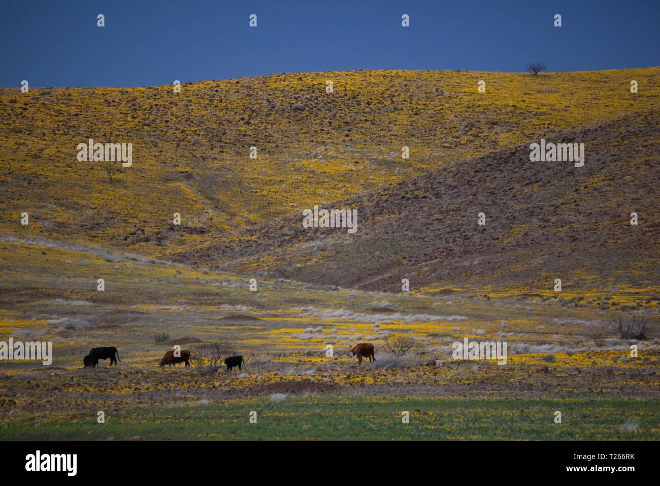 San Bernardino Valley, Cochise County, Arizona, USA Stock
