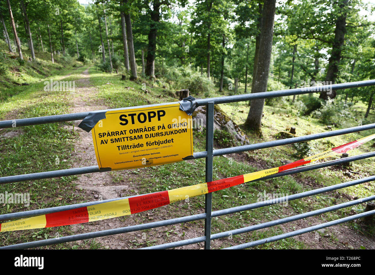 Omberg 2016 07 15 Another Case Of Anthrax Has Been Found In The Herd Of Cattle At The First Infected Farm At Omberg In Ostergotland Photo Jeppe Gustafsson Stock Photo Alamy