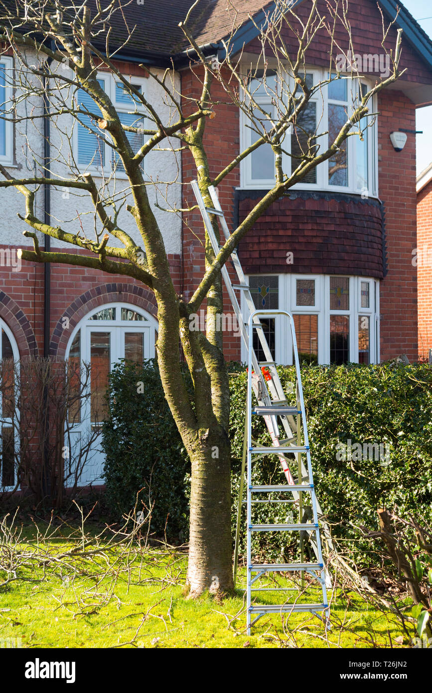 Step Ladders Leaning Against A Tree In A Domestic Garden During The Process Of Tree Pruning England Uk 106 Stock Photo Alamy