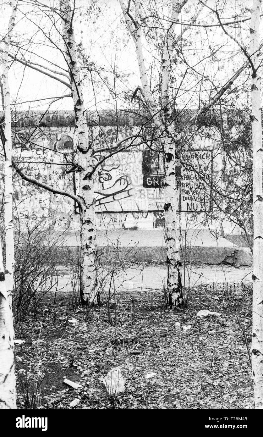 West Germany, West-Berlin, the wall and birch trees in year 1988 viewed from West Berlin, scan from 35 mm black and white negative - Stock Image