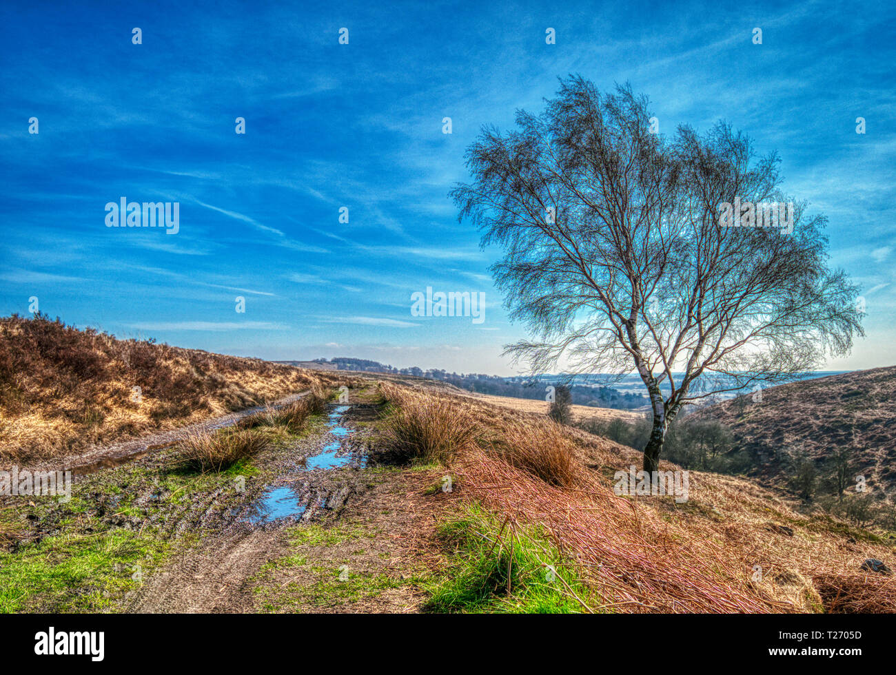 Barbrook, Derbyshire, UK. 30th March, 2019. UK Weather: Bright blue sky on a warm sunny day in the Barbrook Valley, Peak District. HDR landscape photography. Credit: Doug Blane/Alamy Live News Stock Photo