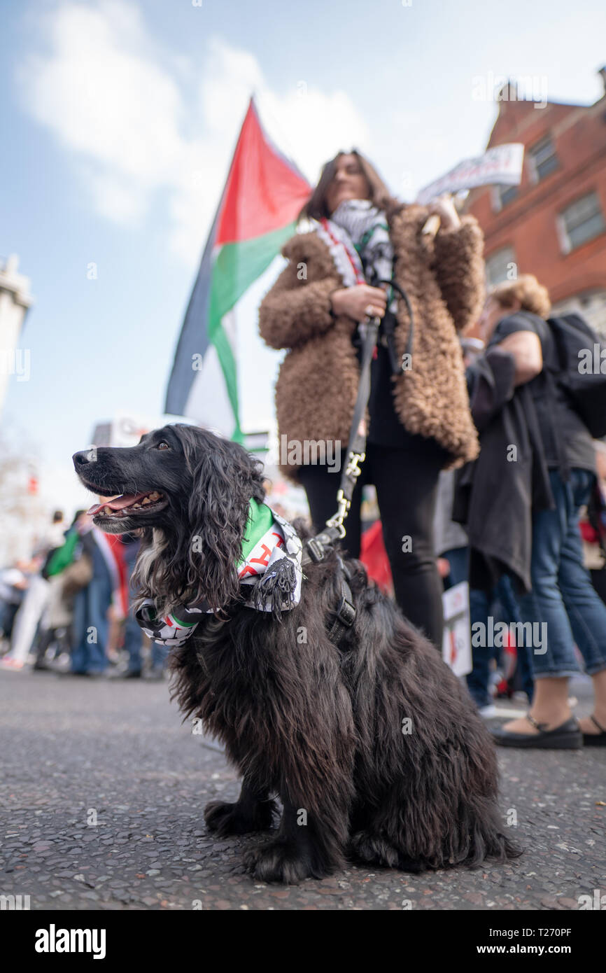 London, UK. 30th March 2019. A dog at a pro-Palestine demonstration (Exist, Resist Return) outside the Israel embassy in London. Photo date: Saturday, March 30, 2019. Photo: Roger Garfield/Alamy Live News Credit: Roger Garfield/Alamy Live News - Stock Image
