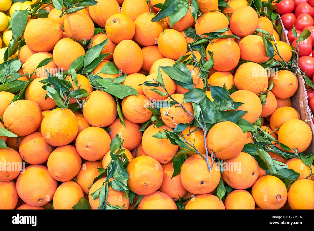 Fresh ripe oranges with green leaves for sale at market - Stock Image