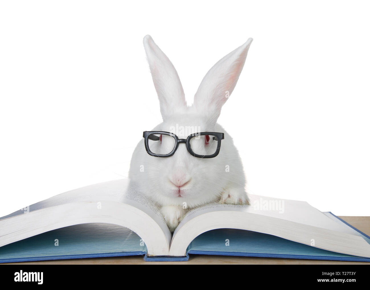 Portrait of an adorable white albino bunny rabbit wearing intelligent geeky looking black glasses, paws on book looking directly at viewer. Isolated o - Stock Image