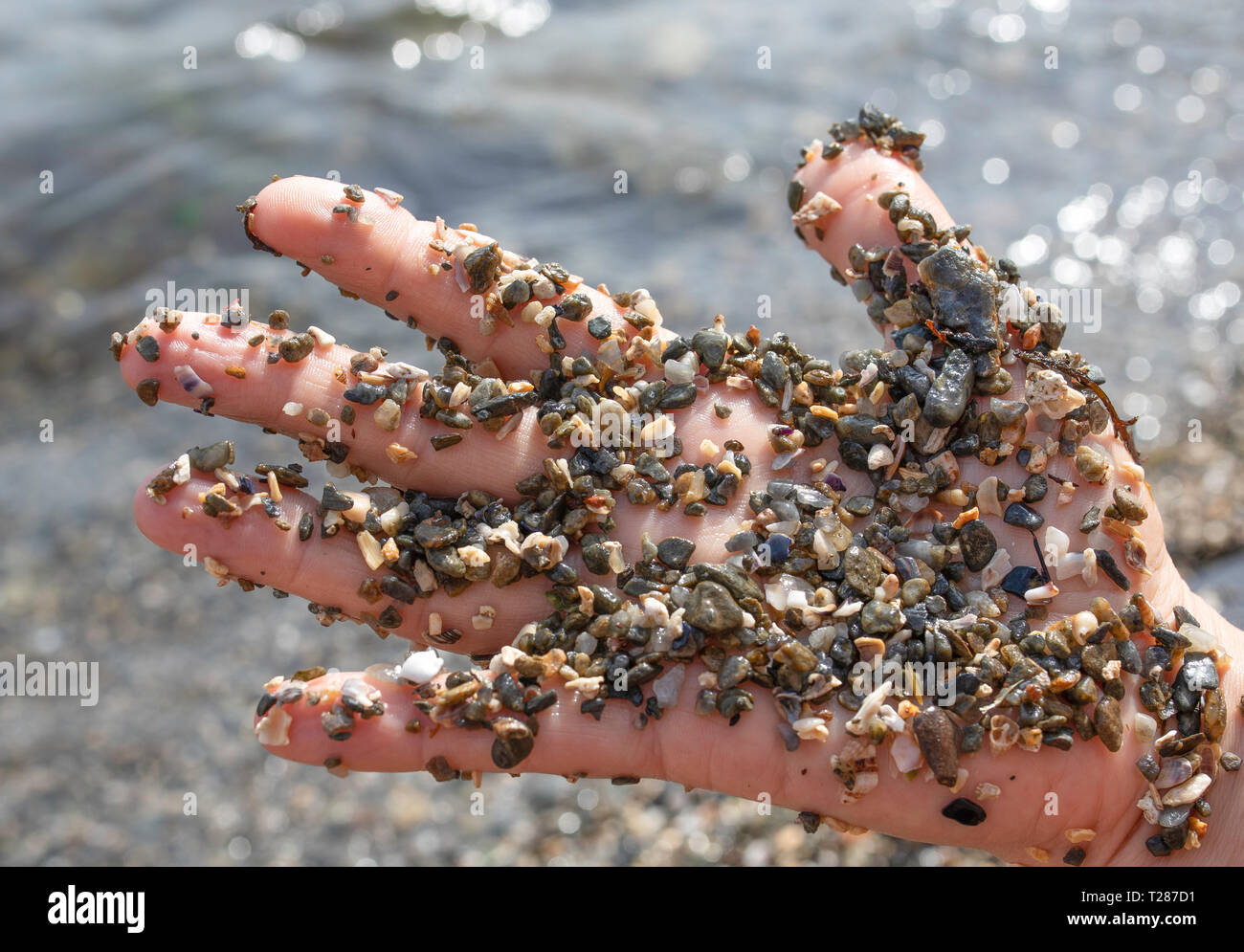 Fine sea gravel on a woman's hand, little shells, stones, pieces of glass. - Stock Image