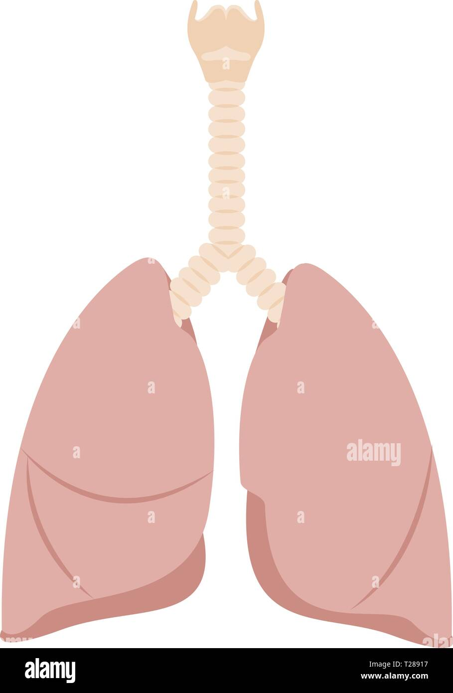 Abstract human lung - Stock Image
