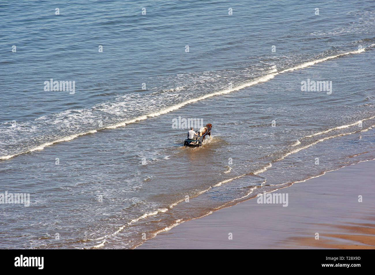 Man with a pony and trap in the surf at Whitby, Noth Yorkshire, UK, GB. - Stock Image