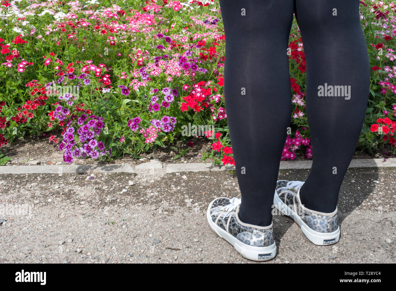 Purple and red flowers and a girls legs - Stock Image