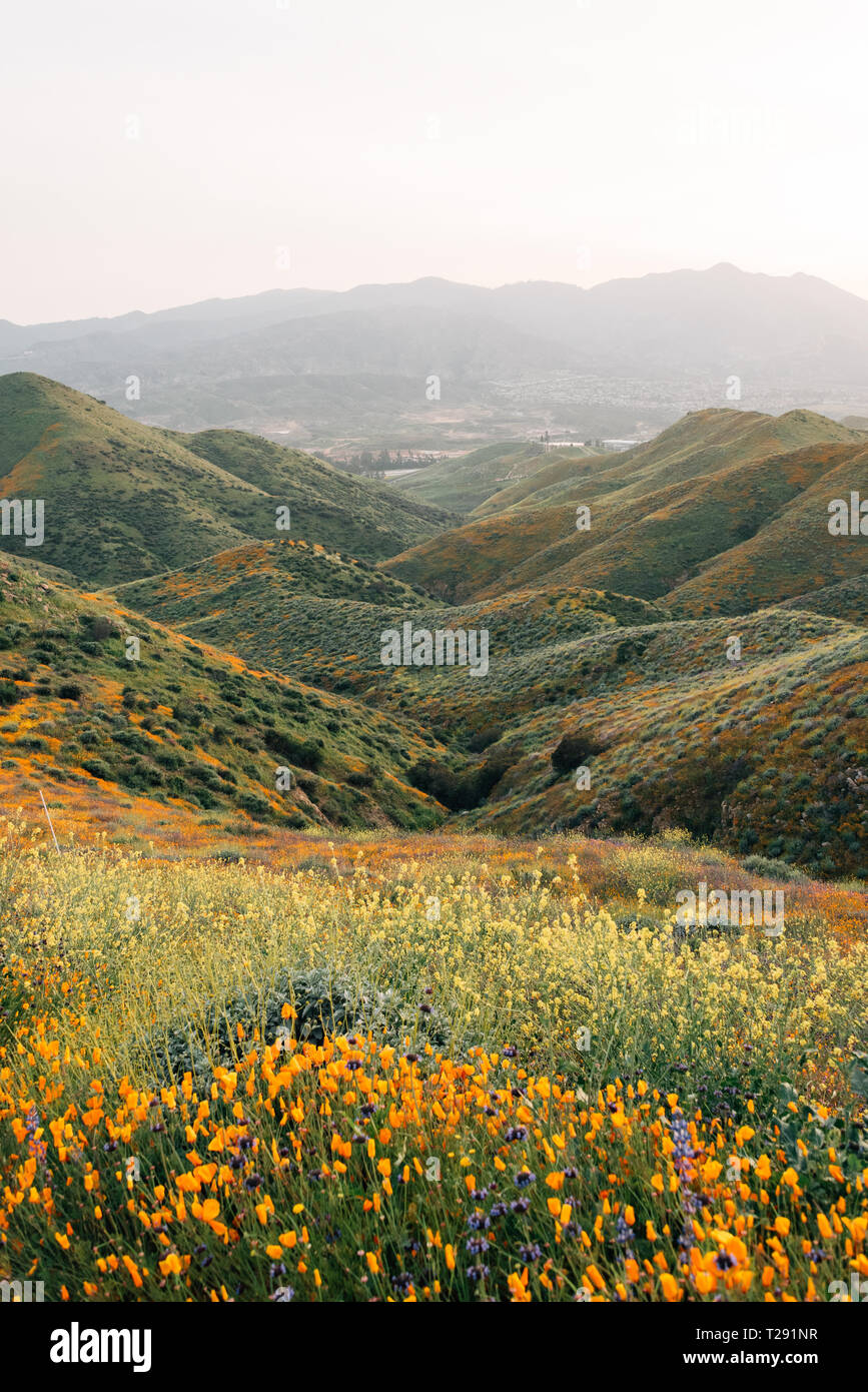 Poppies and view of hills at Walker Canyon, in Lake Elsinore, California - Stock Image