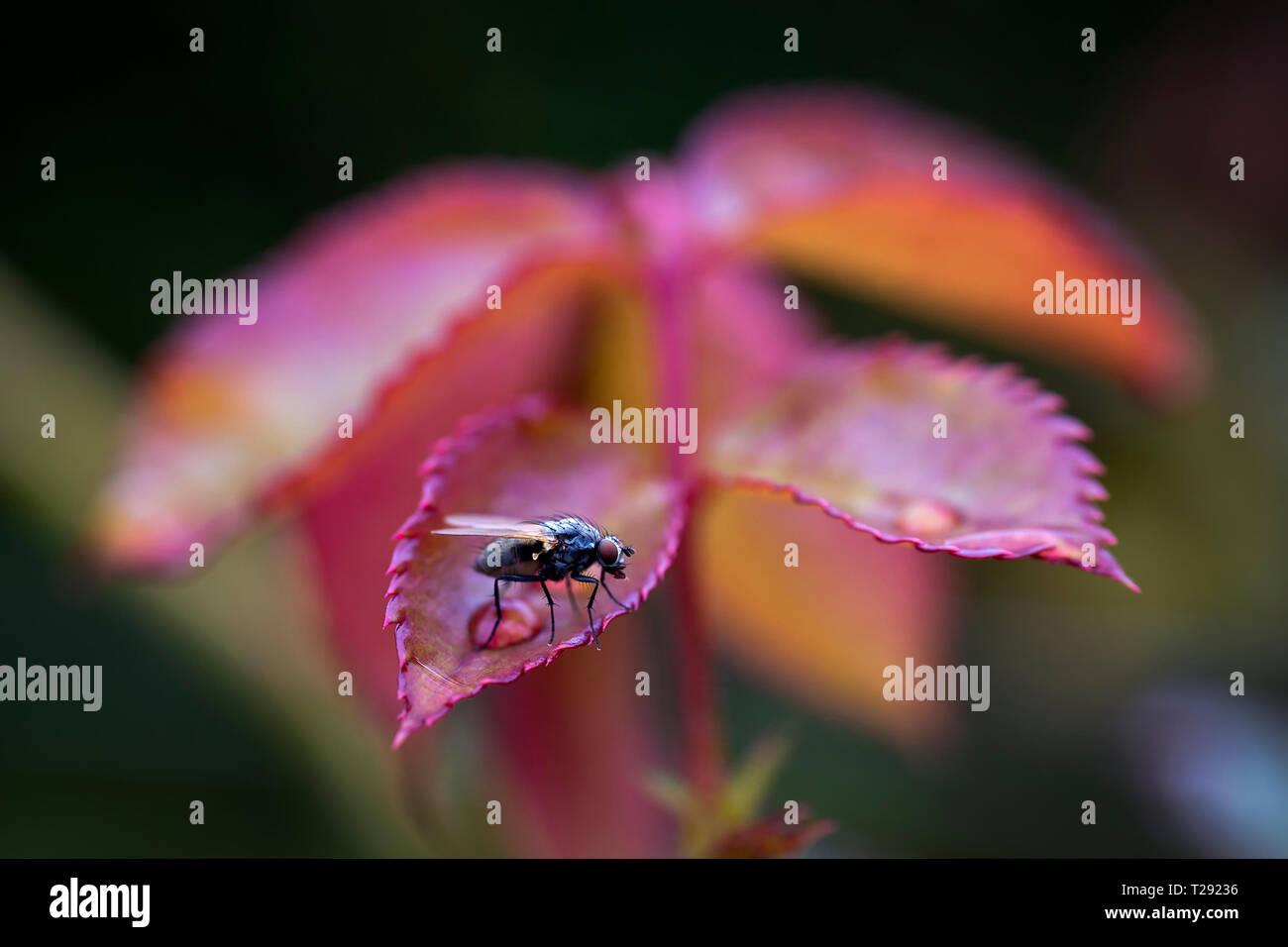 Fly sitting on autumn foliage - Stock Image