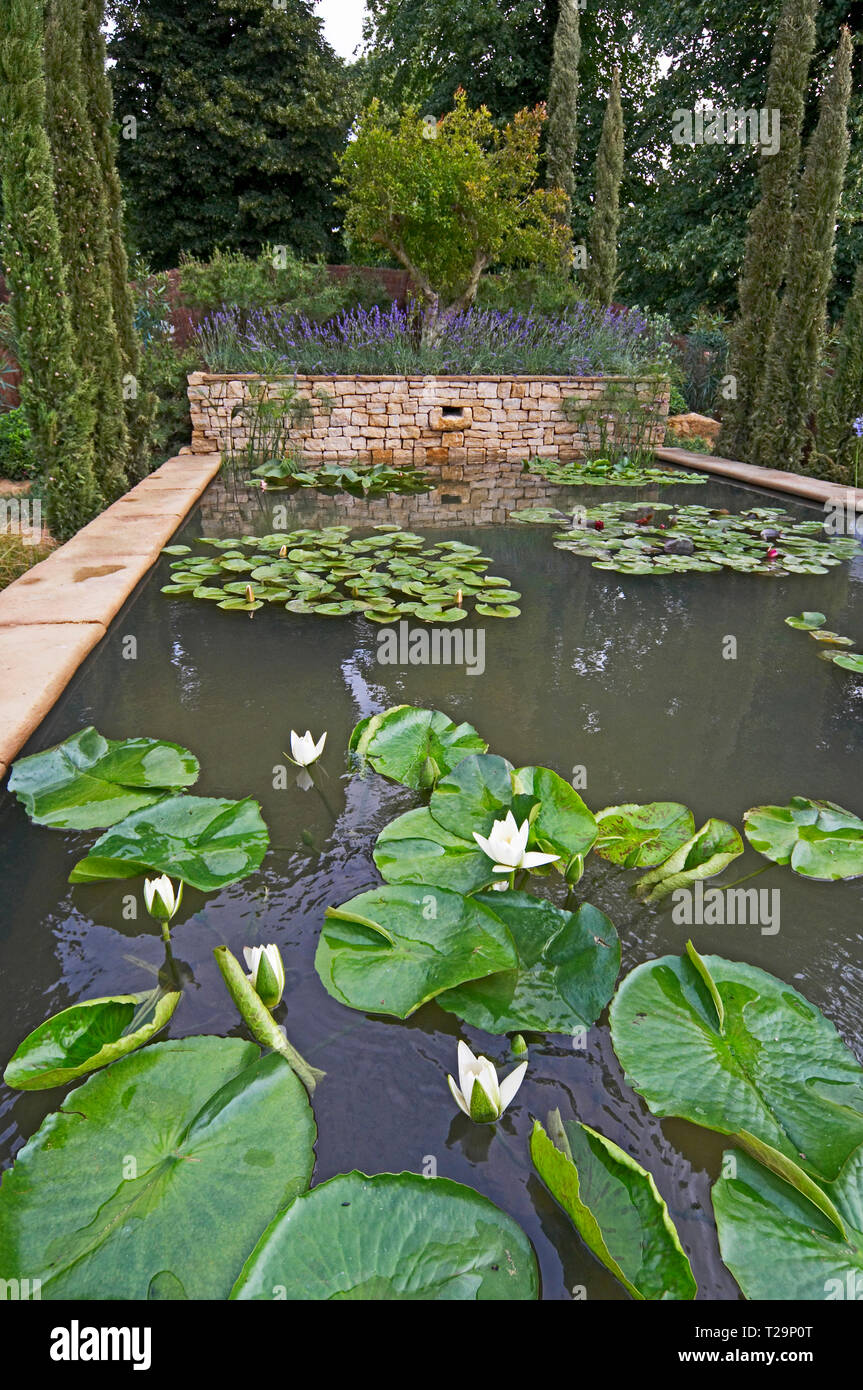 An attractive water garden with water lilies in a woodland setting of Cyprus trees Stock Photo