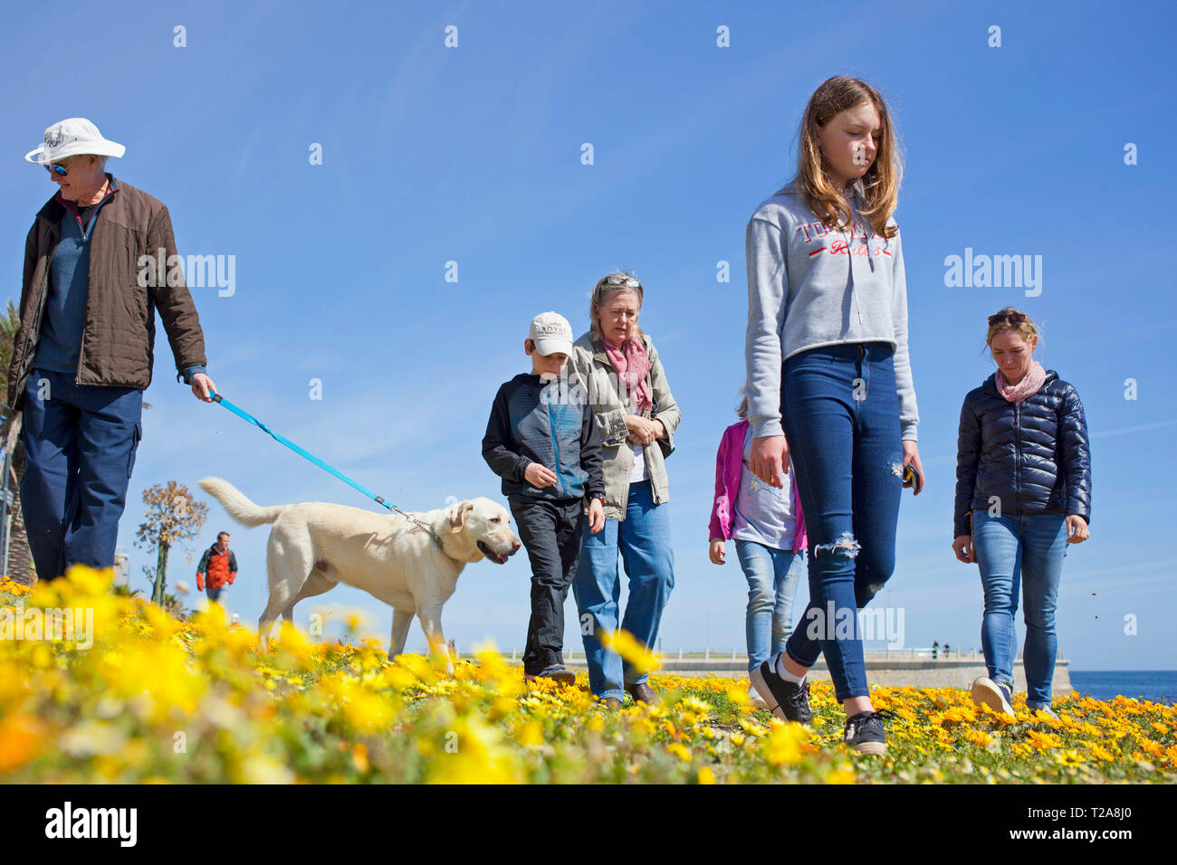 A family and their dog walking along the promenade, Sea Point, Cape Town. Stock Photo