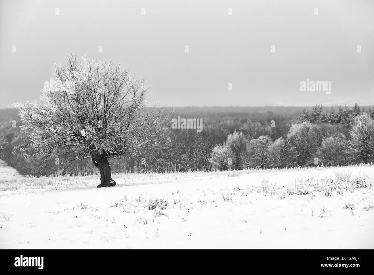 Wimter scenes around Tirgu Mures city, Marosvasarhely, Transylvania, Romania - Stock Image