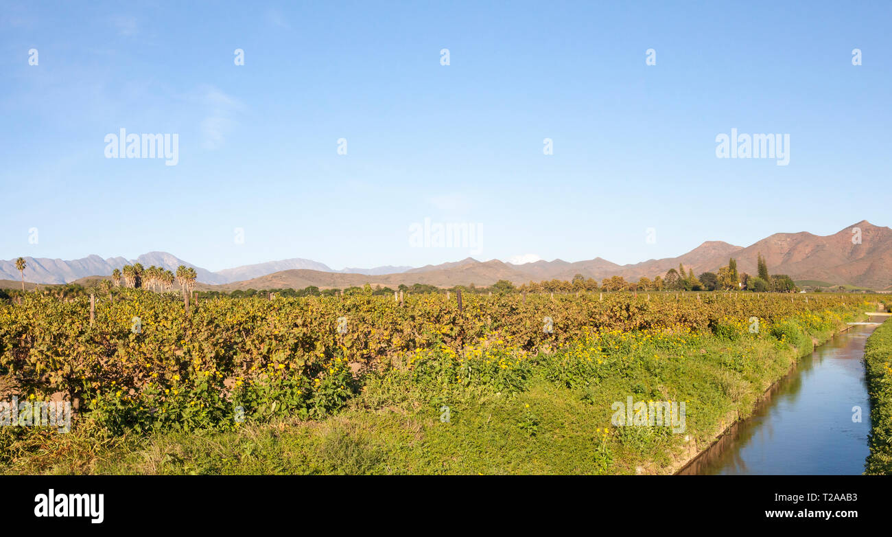 Scenic panorama of the vineyards and Langeberg Mountains, Robertson Wine Valley, Western Cape Winelands, Route 62, South Africa with irrigation canal  - Stock Image