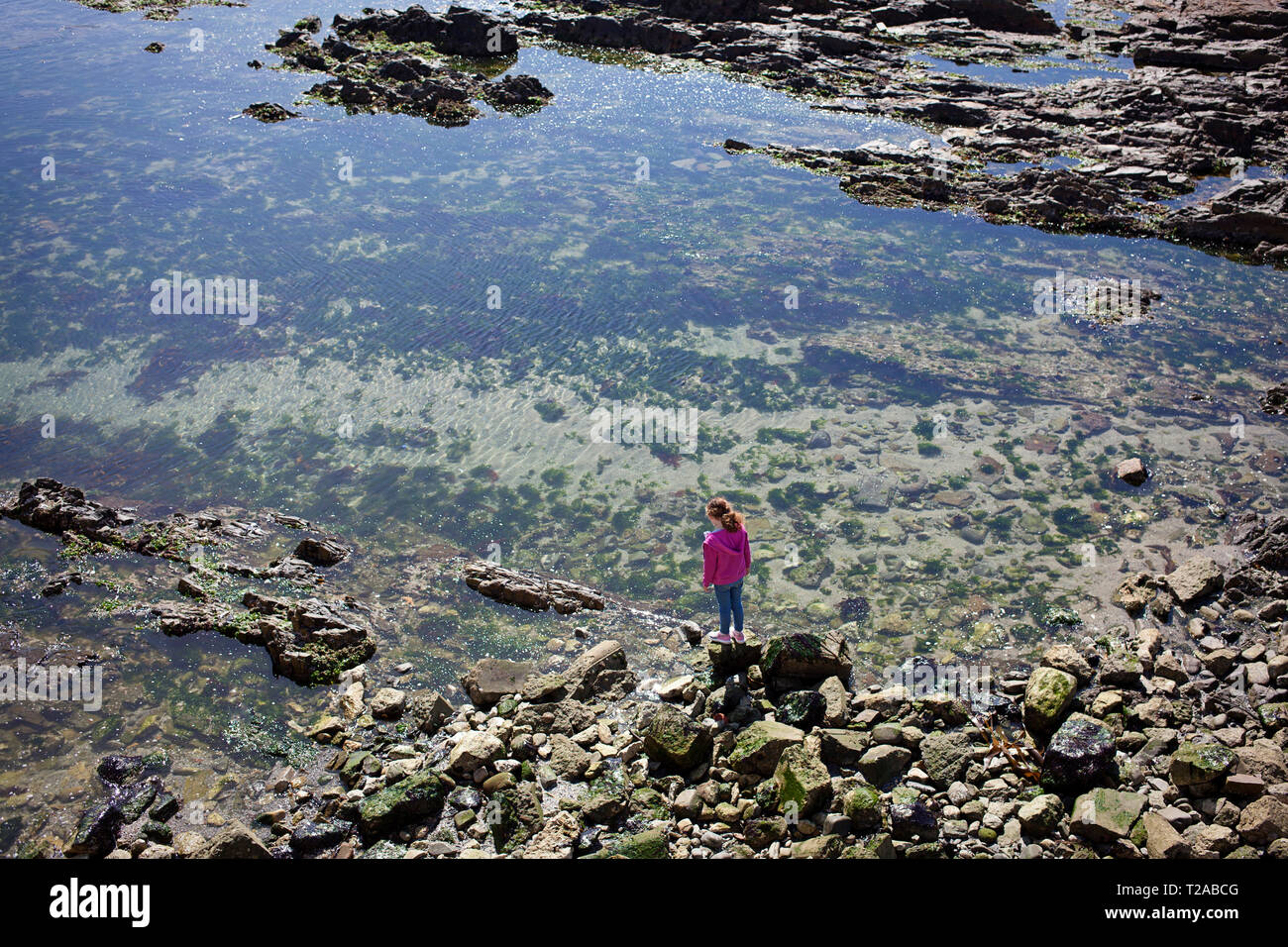 Young girl in pink top looking into a rock pool Stock Photo