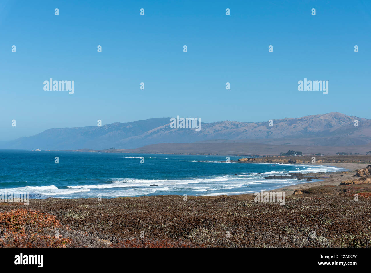 Dead flower fields overlooking blue ocean with white waves breaking onto shore under bright blue sky. - Stock Image