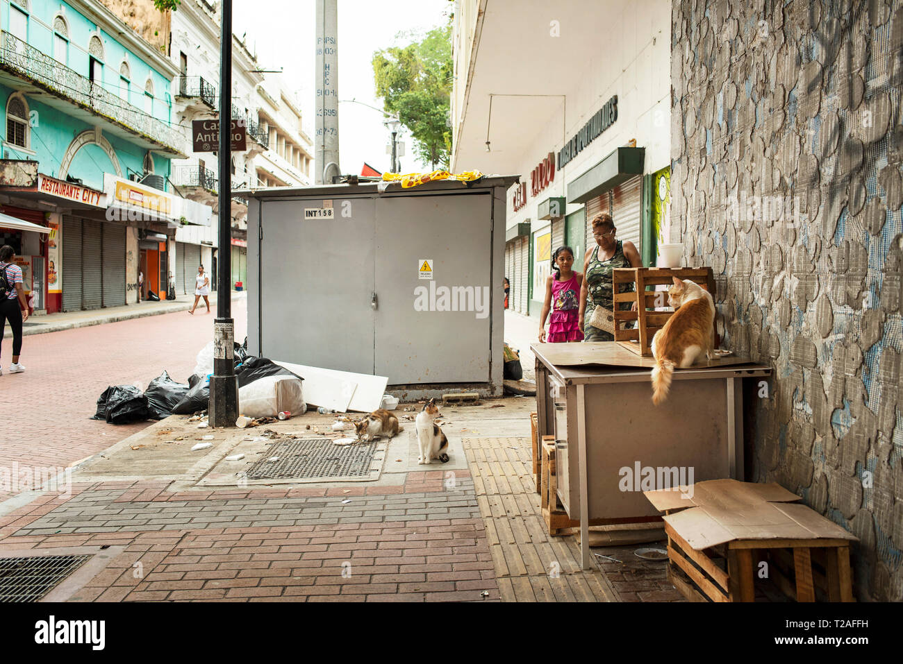 Street cats feeding from leftover food on Avenida Central, the main shopping street of Panama City, Panama, Central America. Oct 2018 - Stock Image