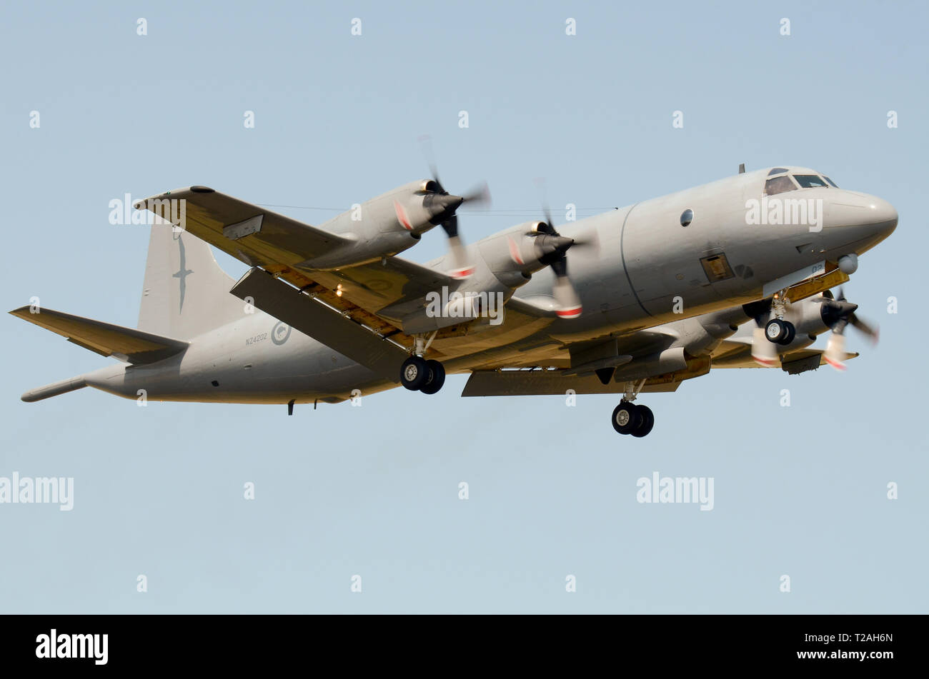 Royal New Zealand Air Force Lockheed P-3 Orion plane, upgraded by L-3 Communications Canada and now designated as P-3K2. Maritime patrol aircraft 5sqn Stock Photo